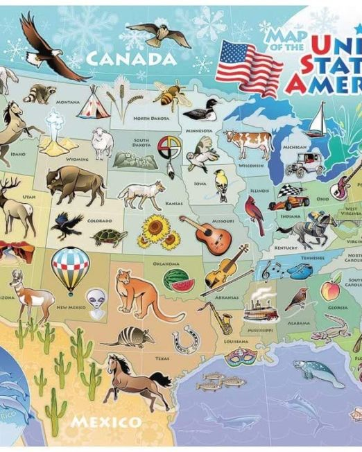 USA Map Tray Puzzle