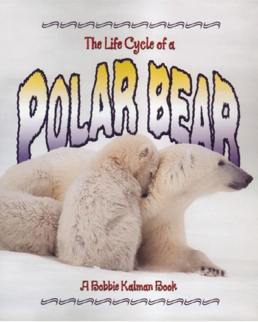 Life Cycle of a Polar Bear