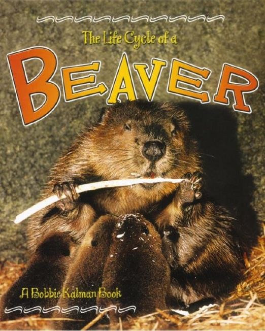 Life Cycle of a Beaver