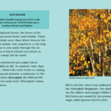 CA Close Up: Canada's Trees
