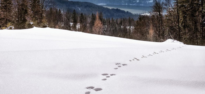 Animal Tracking Blog