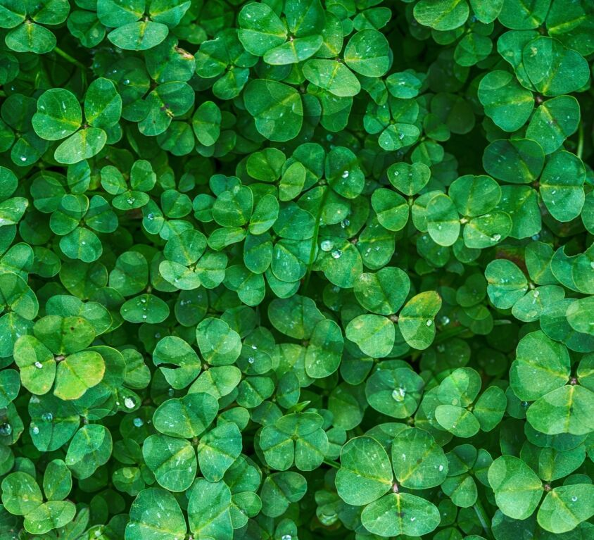 St. Patrick's Day Blog Cover