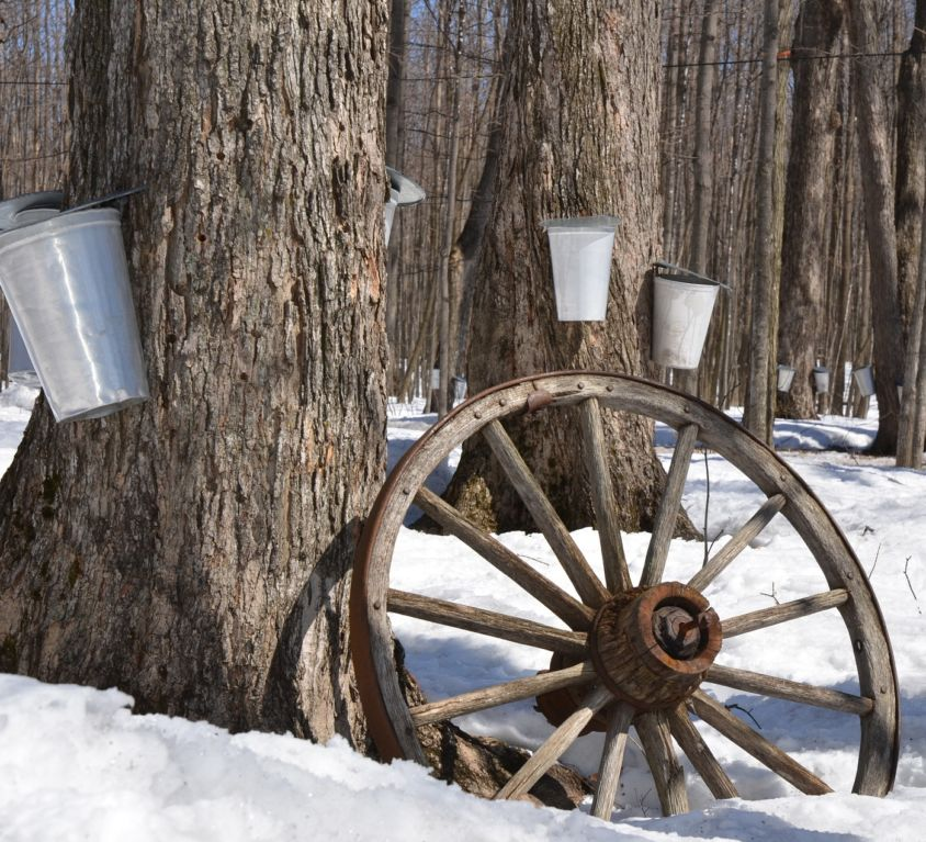 How to Make Maple Syrup Blog 3
