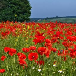 Remembrance Day Blog Cover