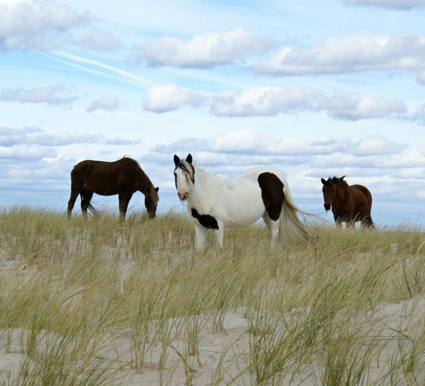 wild-ponies-752459_1280