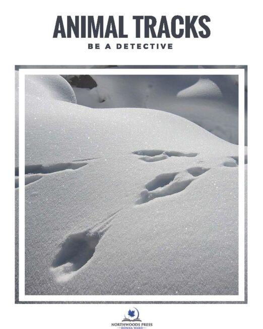 BeADetective_-_Animal_Tracks_Page_1
